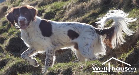 Kronleuchter Reinigen ~ Kronleuchter reinigung bettwanzenspührhund